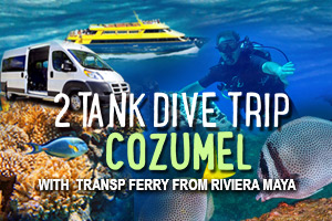 2_Tank_Dive_Trip_Cozumel_with_Tranp_Ferry_from_Riviera_Maya