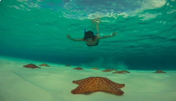 Snorkel at El Cielo Cozumel